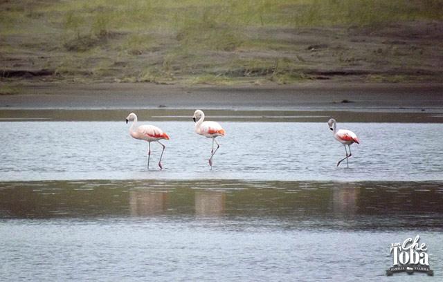 Avistaje de Aves en Monte Hermoso