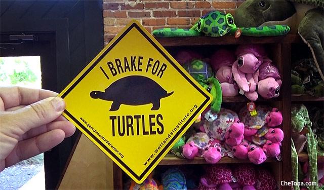 ayudemos a las tortugas