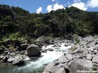 bosque-boquete-panama