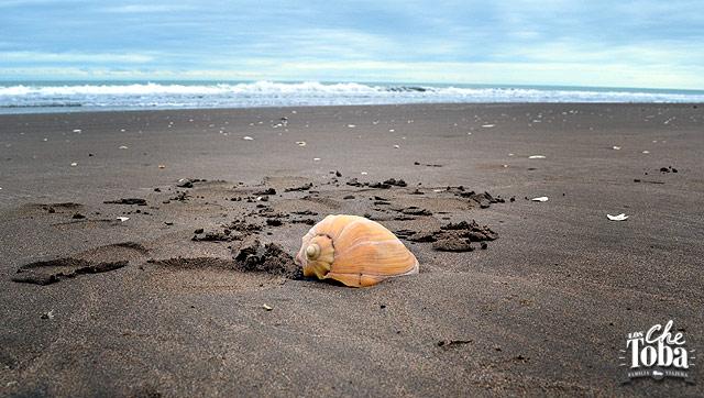 caracol-en-la-playa