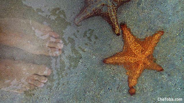 estrellas-pata