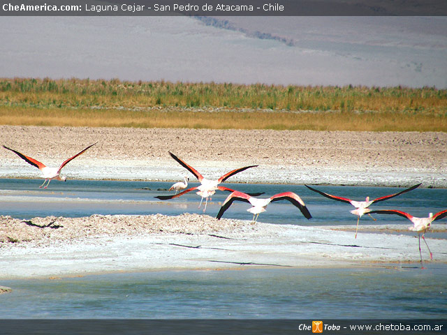 Excursión Laguna de Cejar - San Pedro de Atacama 4