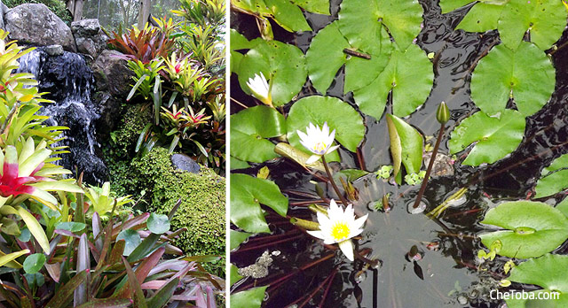 Flores Botánico Calarcá
