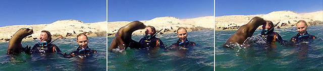 buceo con lobos marino Madryn