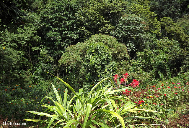 Jardín Botánico Calarcá