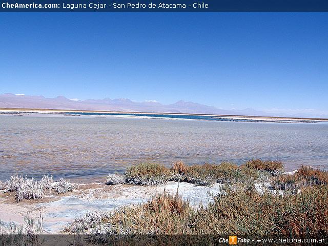 Excursión Laguna de Cejar - San Pedro de Atacama 8