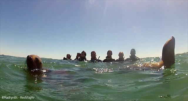 lobos-marinos-todos-agua