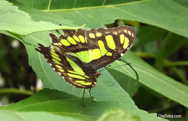 Mariposa Colombia
