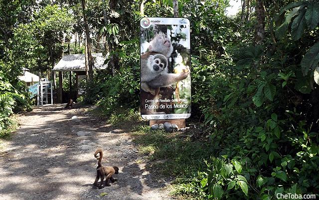 Reserva de los Monos Puyo Ecuador