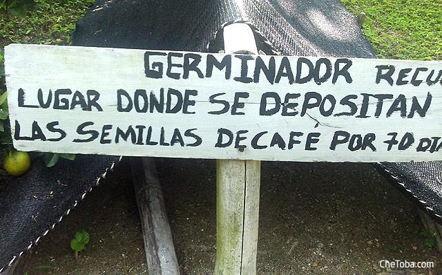 Germinando Café Chapolas