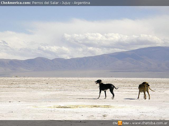 Perros del desierto