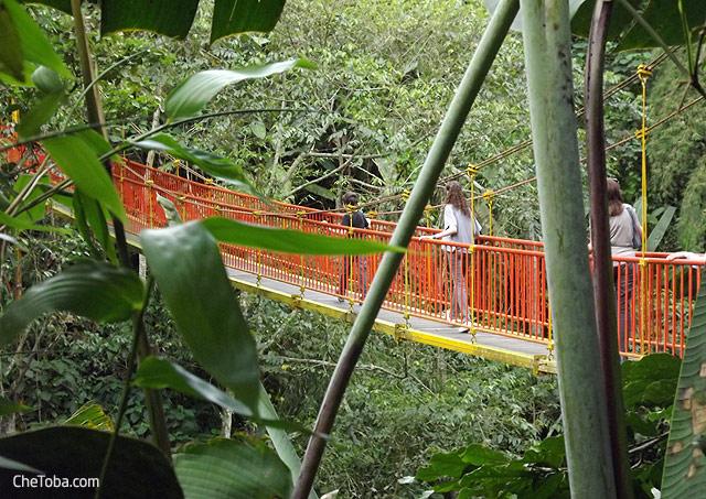Puente Colgante puente Calarcá