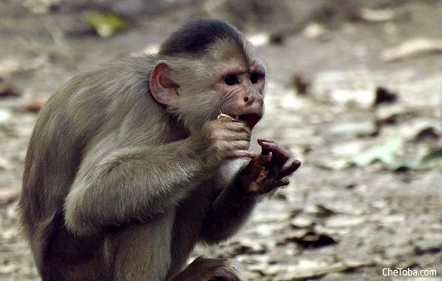 Reserva Rescate Los Monos Puyo Ecuador