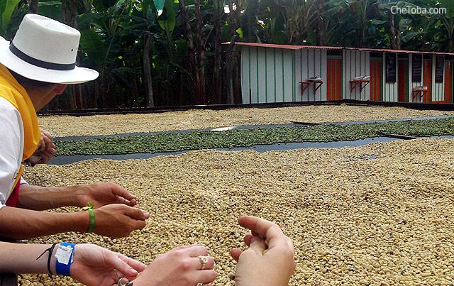 secando el cafe
