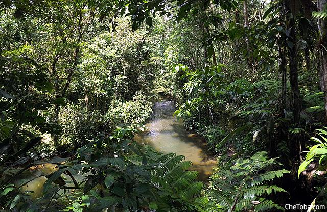 Amazonia Puyo Ecuador
