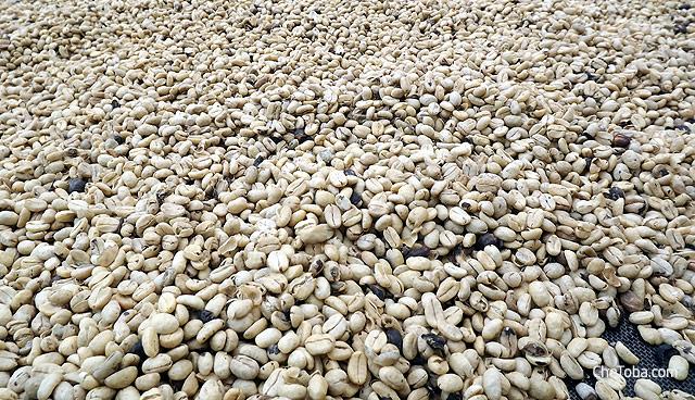 Café, grano de cafe