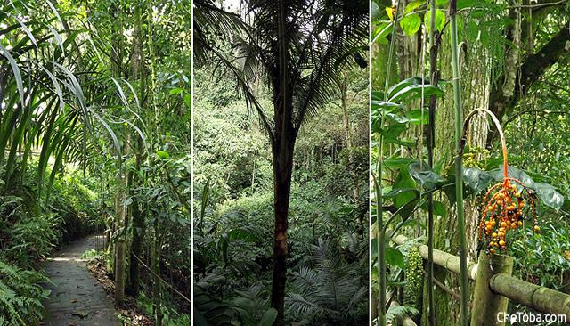Circuito botánico de Calarcá