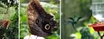 El jardín Botánico y mariposario de Calarcá – Eje Cafetero – Parte II