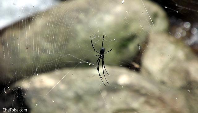 Araña Selva Ecuador