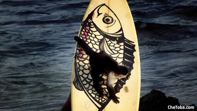 surf-mono