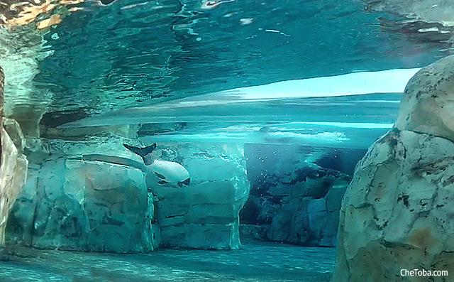 delfines aquatica orlando