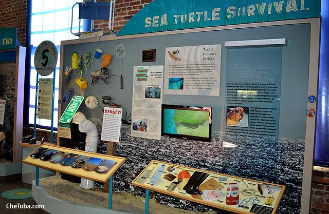 La supervicencia de las tortugas marinas