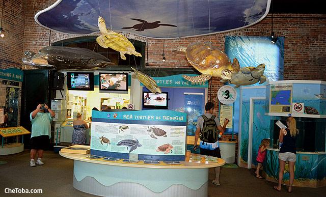 Centro de Tortugas Jekyll Island
