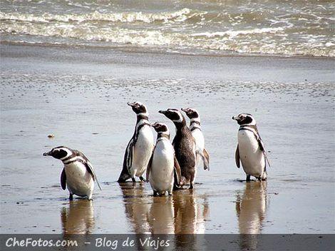 Pingüinos en Puerto Punta Quilla